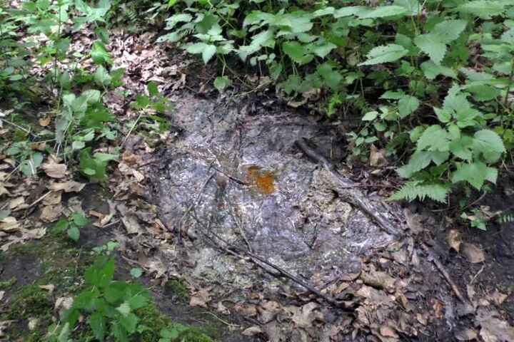 Hier lag die Leiche, die von einem Hund beim Gassigehen gefunden wurde..
