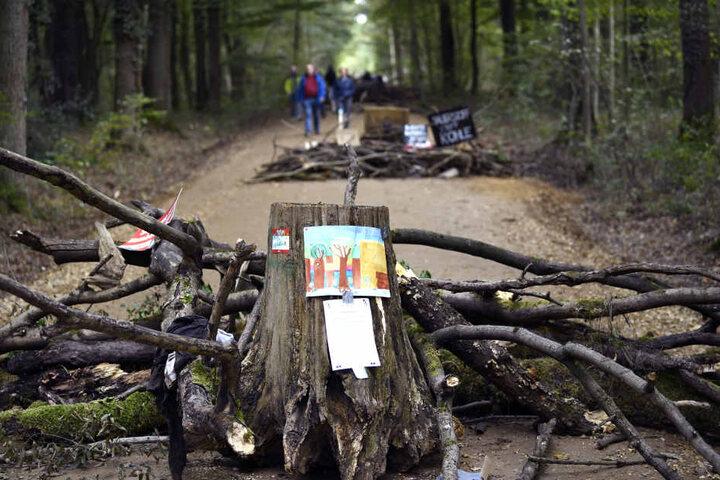 Momentan ist die geplante Rodung im Hambacher Forst gerichtlich ausgesetzt.