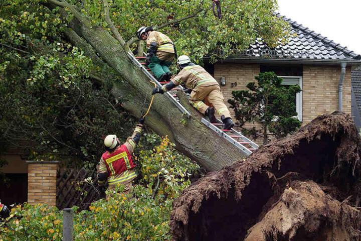 20.000 Bäume sollen durch den Sturm umgefallen oder beschädigt worden sein.