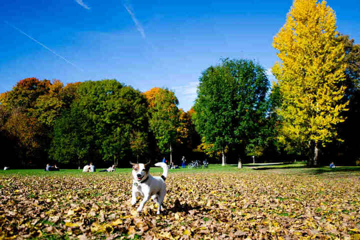 Der Erlös vom Herbstmarkt kommt den Vierbeinern im Tierheim zu gute. (Symbolbild)