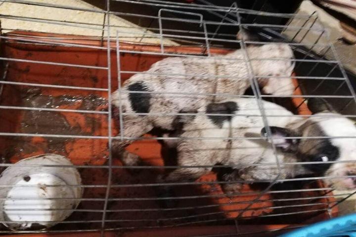 Die kleinen Kerlchen mussten während der Fahrt in vollkommen verdreckten Hundeboxen ausharren.