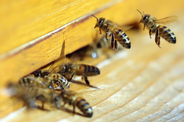 Honigbienen fliegen einen Bienenstock an. Durch eine Öl-Attacke in Langerringen werden viele Bienen sterben.