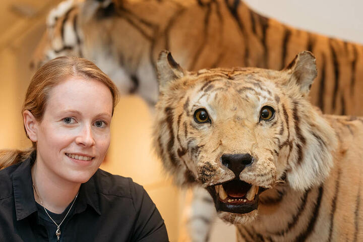 Kuratorin Sandy Reinhardt präsentiert einen präparierten Tiger.