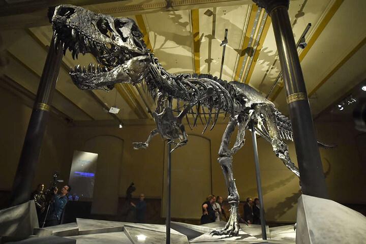"""Bei der Führung werden auch Skelette wie das des T-Rex """"Tristan Otto"""" erklärt."""