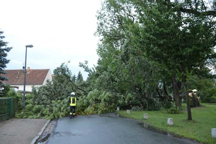 Die Feuerwehren in Sachsen hatten gut zu tun. Überall legte das Unwetter ganze Bäume um, wie hier in Görlitz.