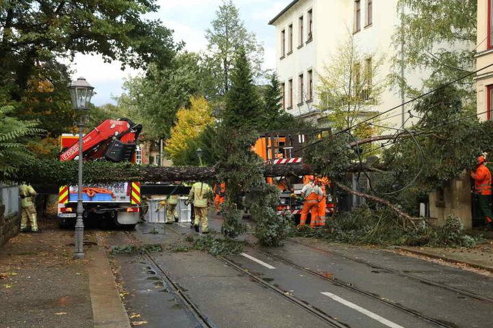 In Dresden kippte ein Baum auf die Ludwig-Hartmann-Straße und riss die Oberleitung der Straßenbahn mit. Die Feuerwehr war im Einsatz, die Linien 6 und 12 unterbrochen.