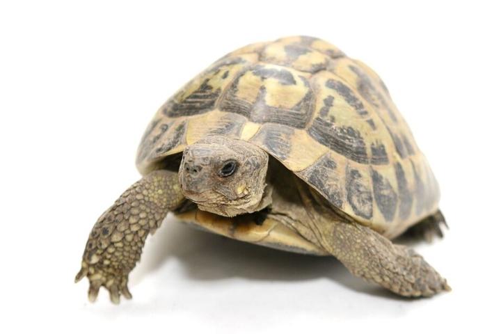 Auch zahlreiche Schildkröten wurden beschlagnahmt.
