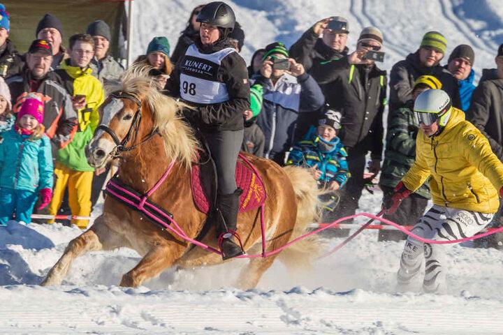 Einzigartig: Vogtländerin Kirsten Wiedemann (31) und Erzgebirger Rico Störzel  als Hänger zeigten mit Haflinger Chiantie (12), wie früher Skikjöring gefahren  wurde - mit nur einer Pferdestärke.