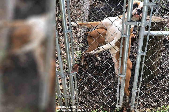 Rund 130 Hunde wurden im verwahrlosten Zustand gefunden.