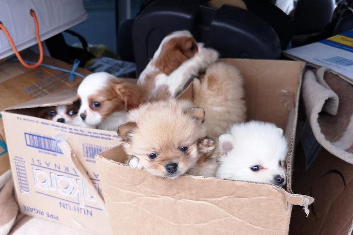 Die acht Welpen waren in Kartons in dem Fahrzeug untergebracht.