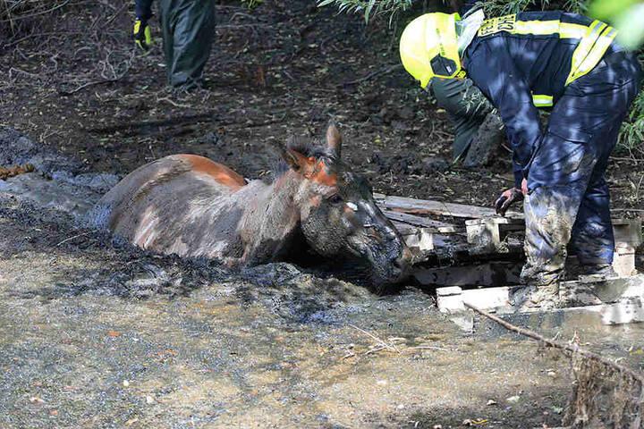 Das Pferd versank bis zum Hals im Schlamm und konnte sich nicht mehr befreien.