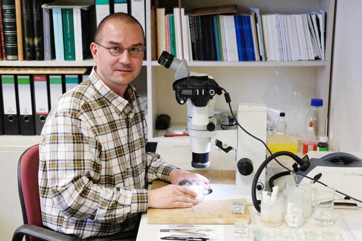 Biologe Sven Erlacher an seinem Mikroskop im Naturkundemuseum.