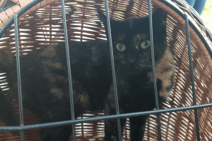 Auch die Katze des Rentners stand nach dem Unfall unter Schock.