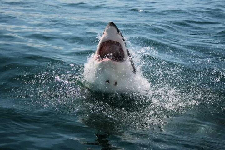 Hai-Attacken sind in Atlantic-Beach eigentlich eher selten. (Symbolbild)