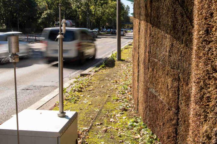 Knapp 560.000 Euro kostet die Wand. Ein Drittel musste bereits getauscht werden, das Moos war abgestorben. (Archivbild)
