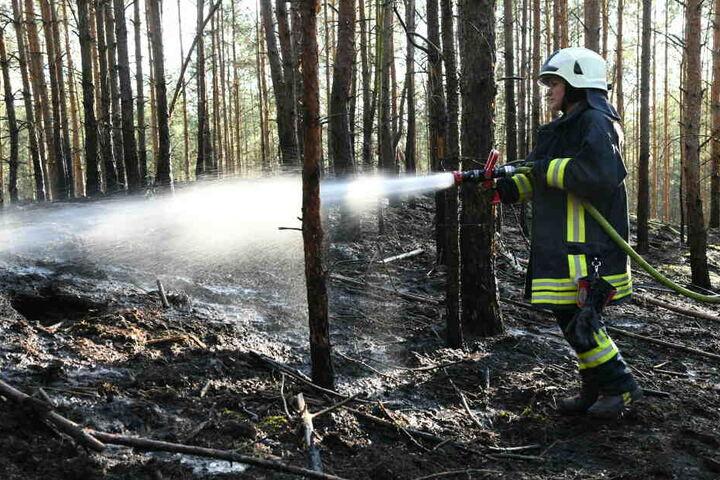 Trockenheit und Hitze machen die bayerischen Wälder für Feuer anfällig. (Archivbild)