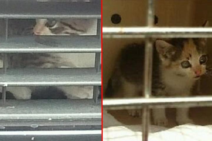 Das kleine Kätzchen ist mittlerweile im Tierheim.