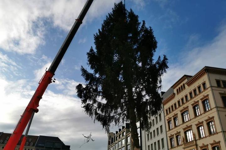 Die Fichte stammt aus Buchwald im Vogtland und soll etwa 24 bis 25 Meter hoch sein.