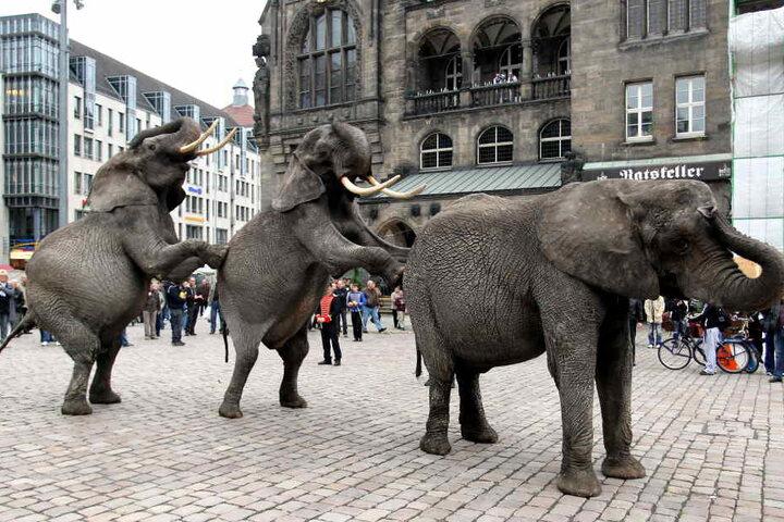 Elefanten-Parade vor dem Rathaus: Solche Auftritte sollen mit dem Wildtierverbot der Vergangenheit angehören.
