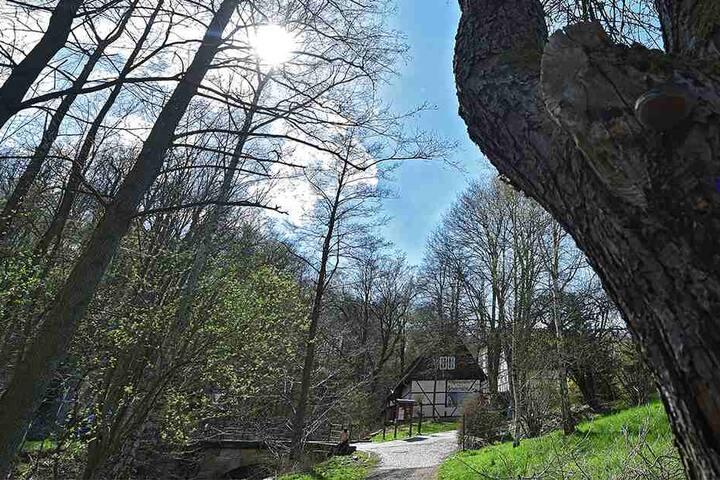 Die Dresdner Region um die Zschoner Mühle ist im Frühjahr ein Wanderparadies.