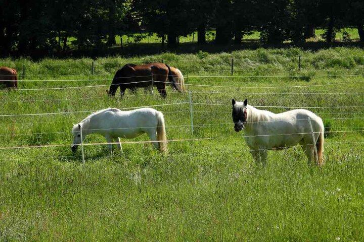 Während die Pferdehaltung vom Veterinäramt unbeanstandet blieb, wurde der Privat-Zoo der Besitzerin von den Behörden aufgelöst.