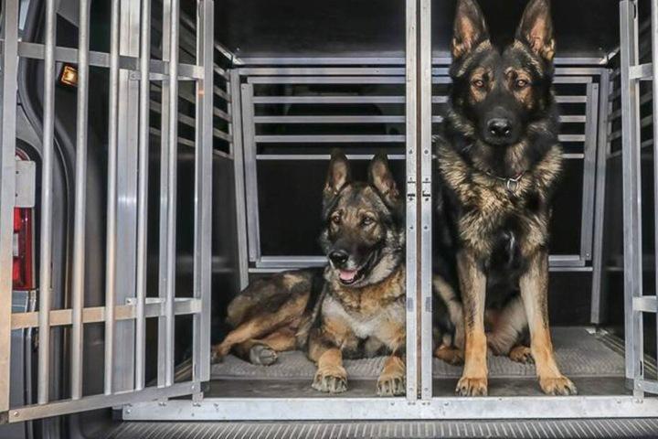 Die Hunde der Polizei Niederbayern werden in stabilen Boxen im Kofferraum zum Einsatzort gefahren.