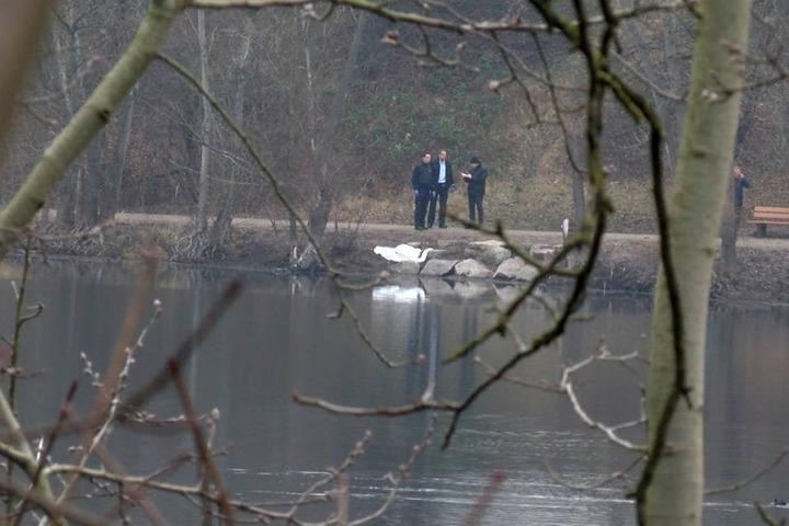 Ermittler der Polizei an einem kleinem See in Mannheim. In dem See hat ein Fußgänger die Leiche eines Babys gefunden. (Archivbild)