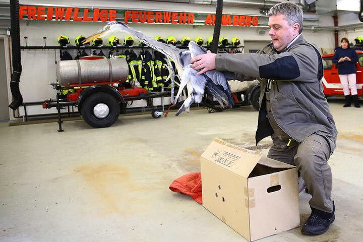 """Michael Hunger (50) lässt seinen """"Pinguin"""" wieder fliegen."""