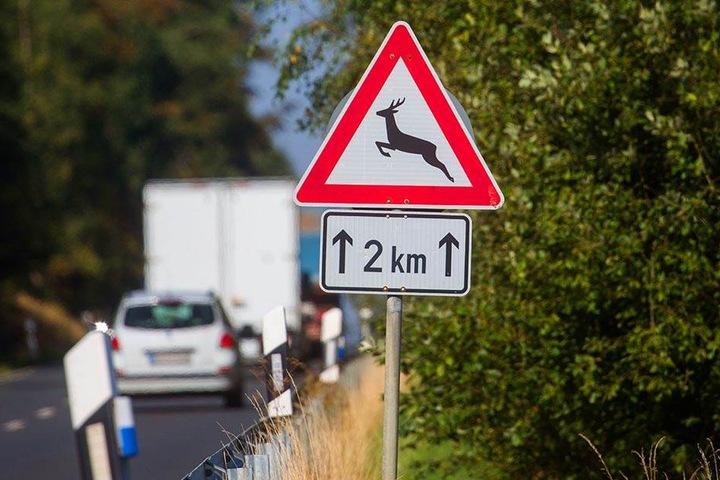 Warnschilder an einschlägigen Stellen sollen vor Wildunfällen schützen.