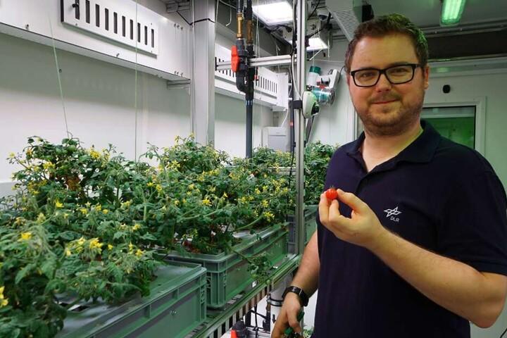 Paul Zabel erntet in einem speziellen Gewächshaus in der Antarktis dort gezogene Tomaten.