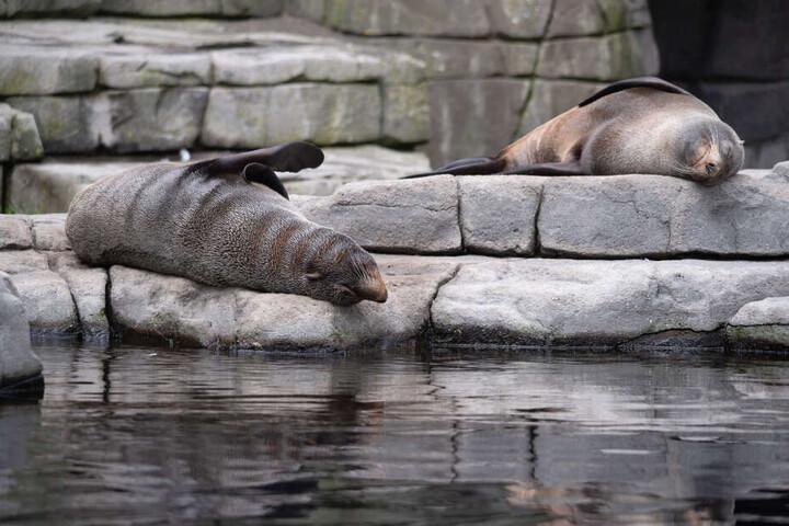 Neben der Leopardin verstarb auch ein Seebär.