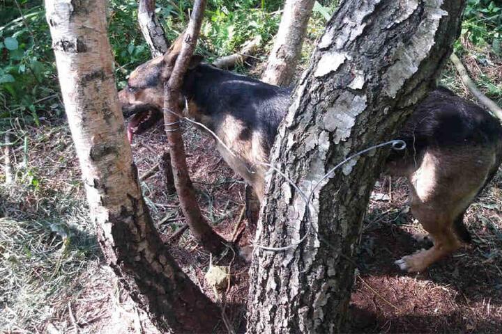 Ein Spaziergänger fand das Tier zufällig im Wald.