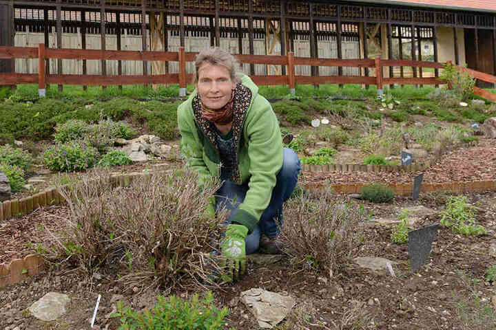 Katrin Brusch (42) lädt bald Schulklassen zu Exkursionen in den Kräutergarten im Zschonergrund.