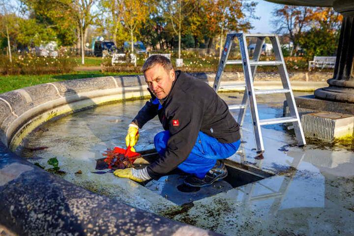 Brunnenbetreuer Uwe Möller (51) schaufelt das nasse Laub aus dem Abfluss vom  Brunnen im Blüherpark.