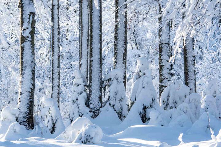 Wer weiße Weihnachten haben will, muss in die Berge fahren.