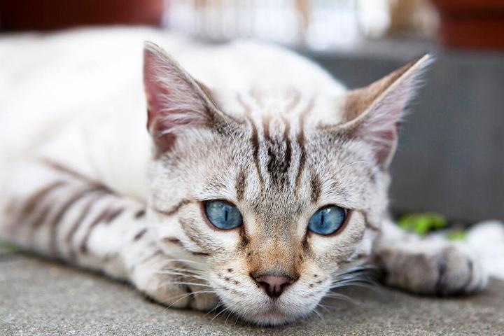 Quetschungen, Knochenbrüche und Organschäden könnten die schlimmen Folgen sein, wenn Katzen über ein angekipptes Fenster versuchen, nach draußen zu gelangen. Daher: Passt auf Eure Lieblinge auf!