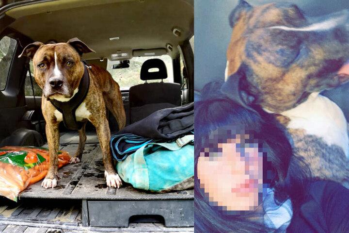 Es wird untersucht, ob Elisa P. von ihrem eigenen Hund getötet wurde.