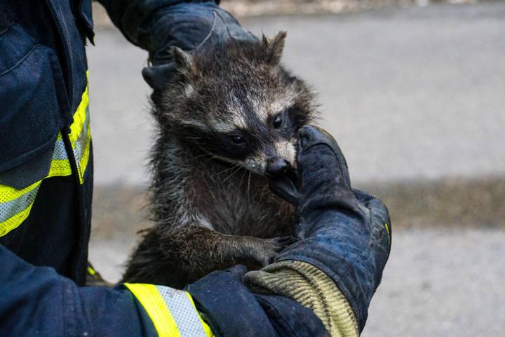 Das Tier blieb unverletzt und wurde einem Mitarbeiter des Tierparkes übergeben.