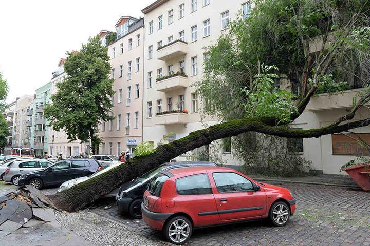 Der aufgeweichte Boden ließ in Berlin-Neukölln einen Baum auf zwei Autos stürzen.