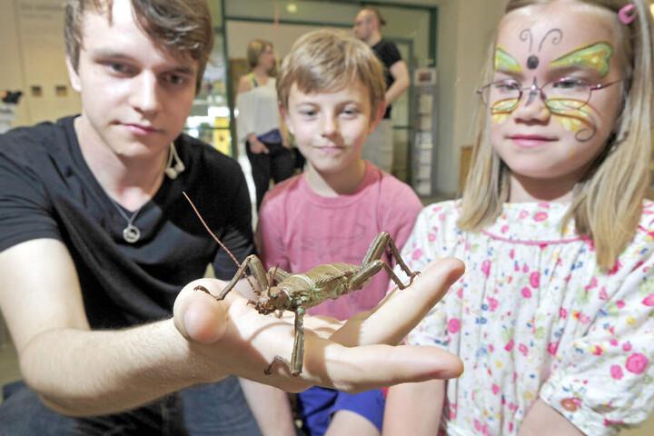 Schreck(e) zum Anfassen: Naturkundemuseums-Bufdi Louis Plünnecke (19) zeigt Clara und Leon eine Pflanzenschrecke.