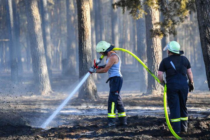 Feuerwehrleute versuchen die Glutnester des Kiefernwalds zu löschen.