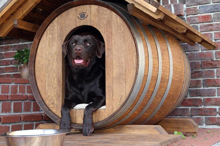 In diesen Hundehütten lagerte einst Wein.