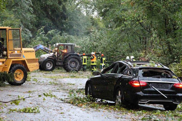 In Schaafheim bei Darmstadt krachte ein Baum auf ein Auto.