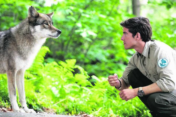 Einer der aufregendsten Momente war für Philipp Danne der Dreh mit Film-Wolf Lobine. Sie reiste mit ihrem Tiertrainer aus Hannover an.