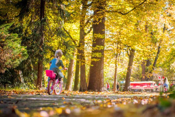 Ein Herbst wie aus dem Bilderbuch! Bei fast sommerlichen Temperaturen  spazierten die Dresdner vergangene Woche durch den Großen Garten.
