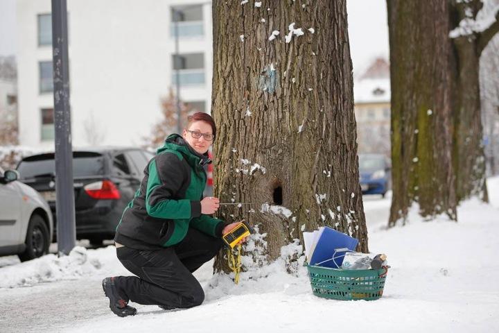 Gärtnerin Sarah Aberle (28) überprüft einen der Bäume im Alaunpark