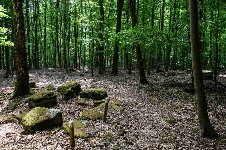 Das alte Marschlager wurde in einem Waldstück in Sennestadt entdeckt. (Symbolbild)