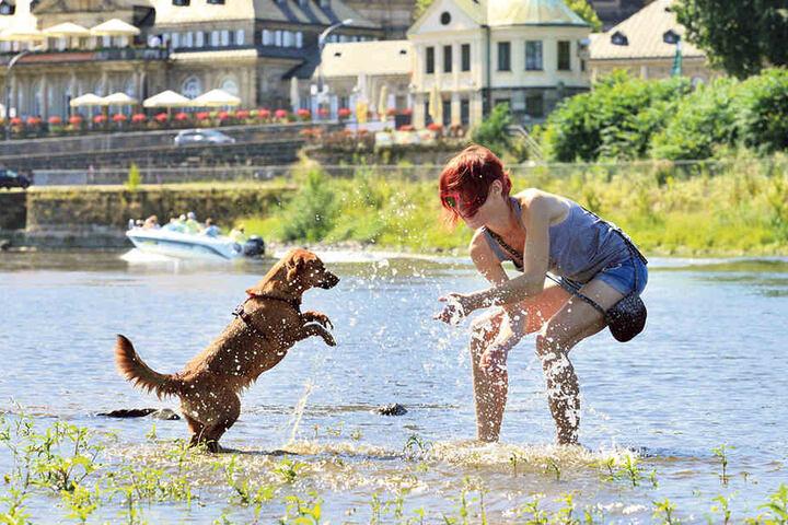 Haben (erlaubten) Spaß an der Elbe: Lisa Roether (25) und ihr Mischling Yuki  (2) beim fröhlichen Planschen.