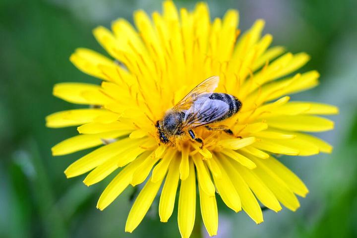 Der Umwelt-, Natur- und Artenschutz in Bayern soll in Zukunft verbessert werden. (Symbolbild)