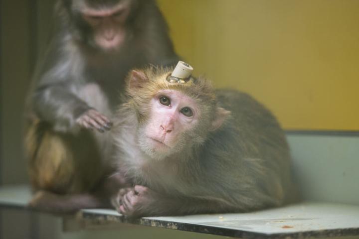 Im Herbst 2014 hatten Tierschützer die Versuche sowie die Haltung der Tiere heimlich gefilmt. (Archivbild)